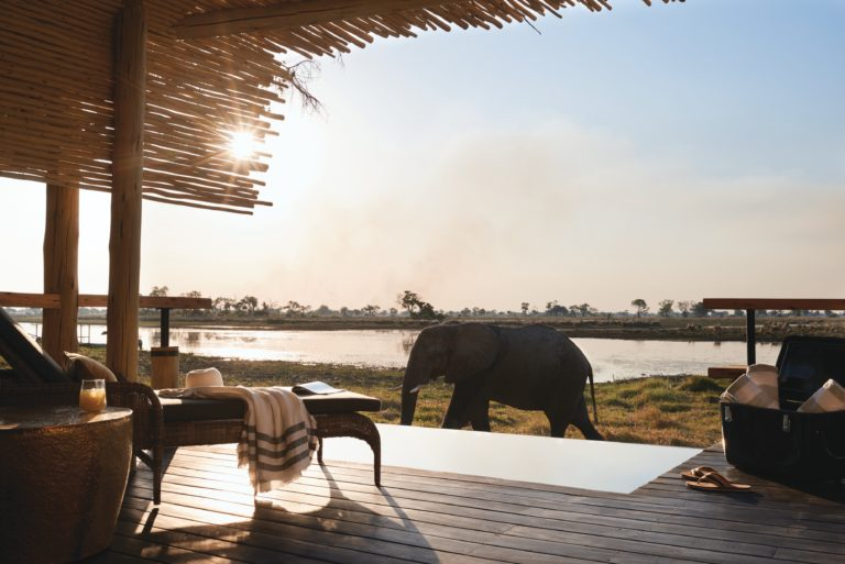 Eagle Island Lodge enjoys numerous visits from these giant pachyderms