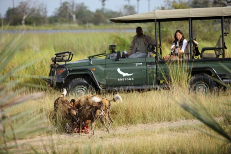Wild dog sighting on game drive from Nxabega camp