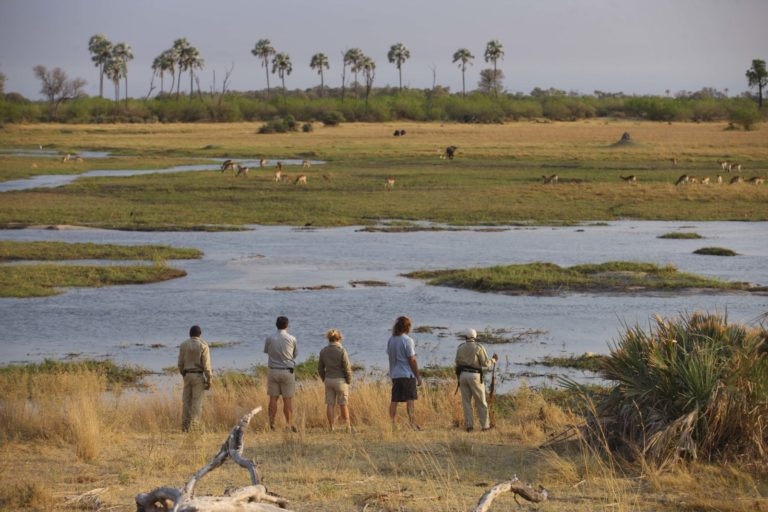 Your professional walking guide at Sandibe interprets the tracks and signs of the African bush