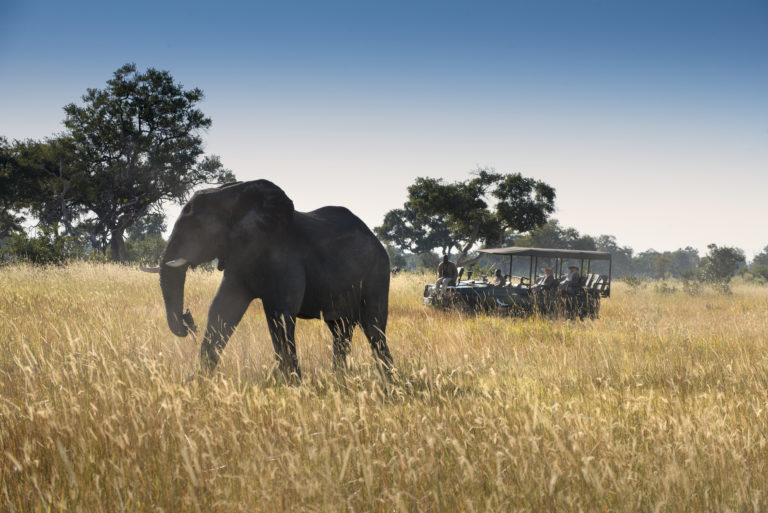 Game drives at Xaranna reveal large species such as elephants