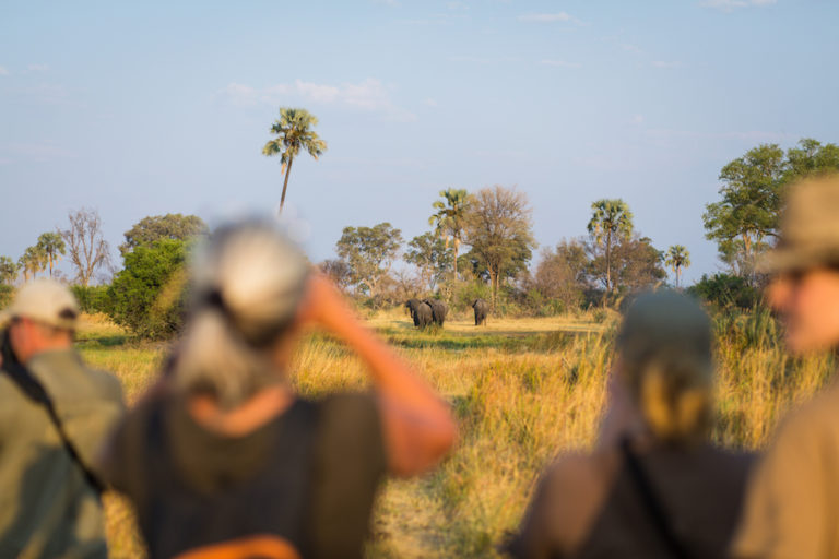 Guided walking safaris are a highlight with Bush Ways Safaris