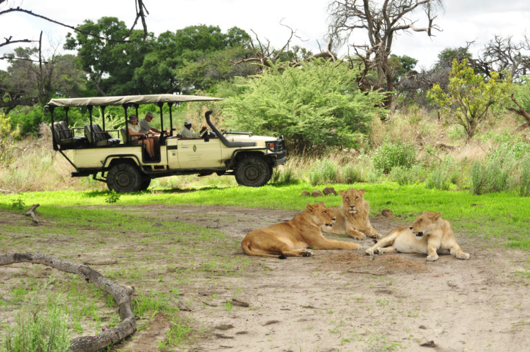 Lions are frequently seen on game drives at Chiefs Camp