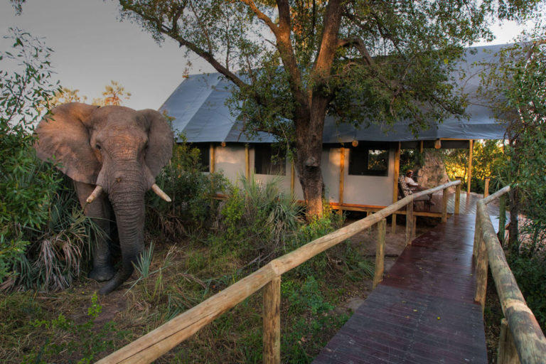 Raised wooden walkway with elephant visitor at Chitabe