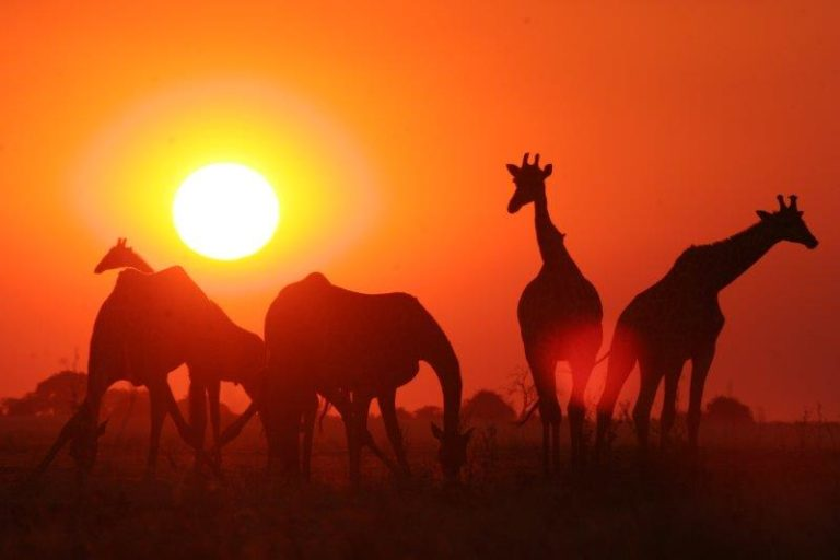A Letaka safari invites guests to experience nature on all levels