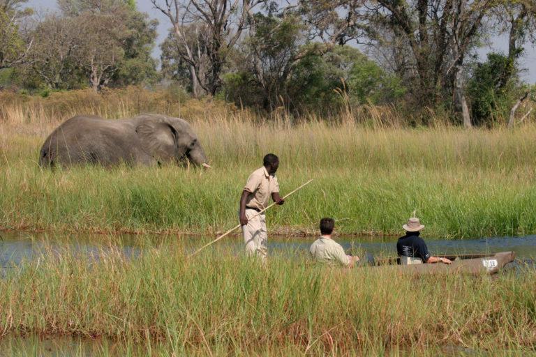 Elephant sighting by mokoro at Moremi Crossin