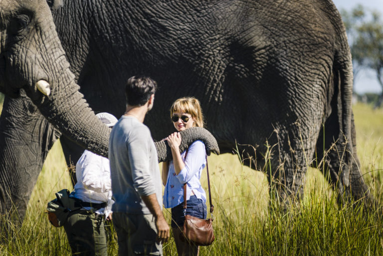Up close and personal with Stanley's Camp elephants