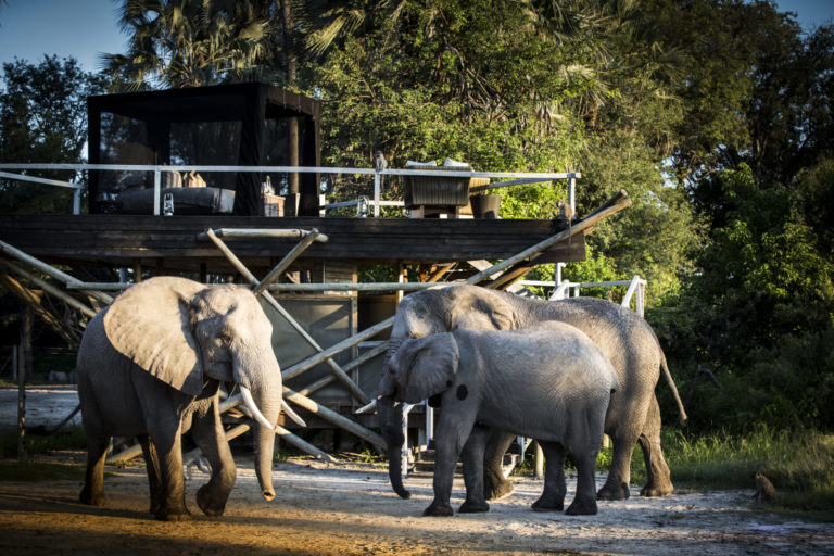 Abu herd of elephants pose in front of camp