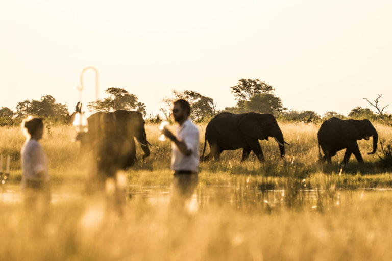 A day in the African bush with the Abu Camp herd