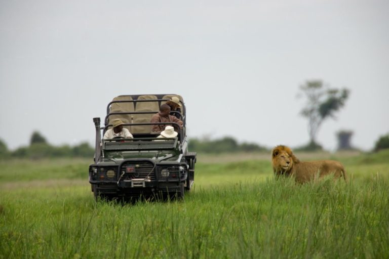 Lion up close on game drive at Duba Explorers camp