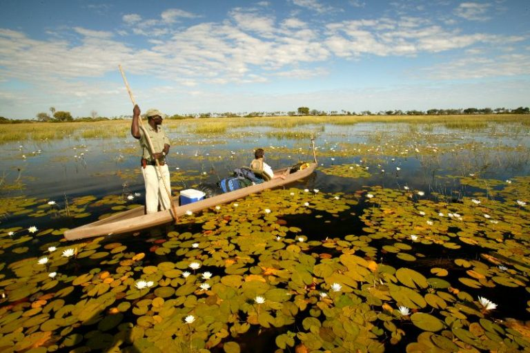 Letaka Safaris invite guests to do some birdwatching from the safety of a traditional Mokoro