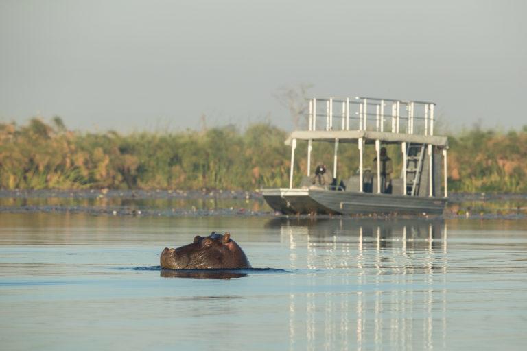 Boating safari from Setari Camp approaches hippo sighting