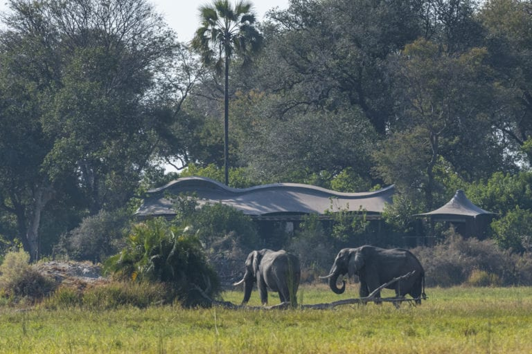 Elephants feeding in front of Xigera Safari Lodge