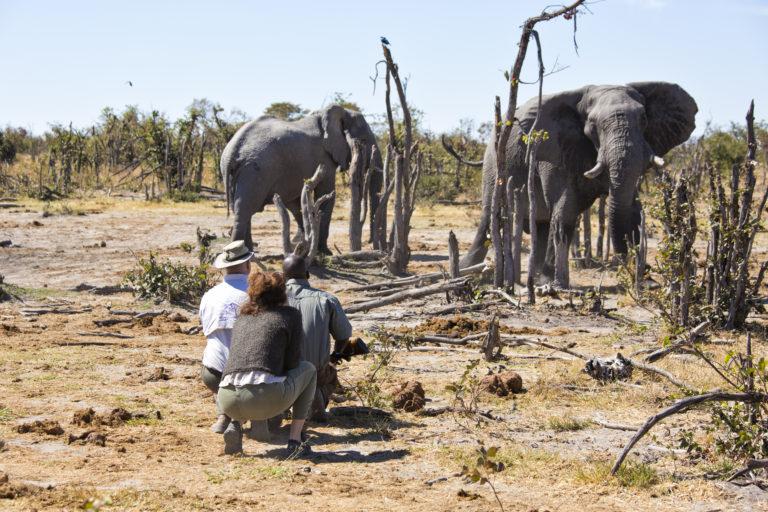 In close proximity to elephants on Hyena Pan walking safari