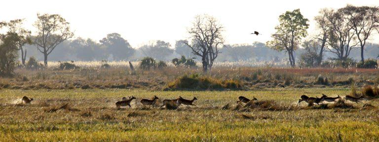 Okavango Mobile Expeditions antelope sighting