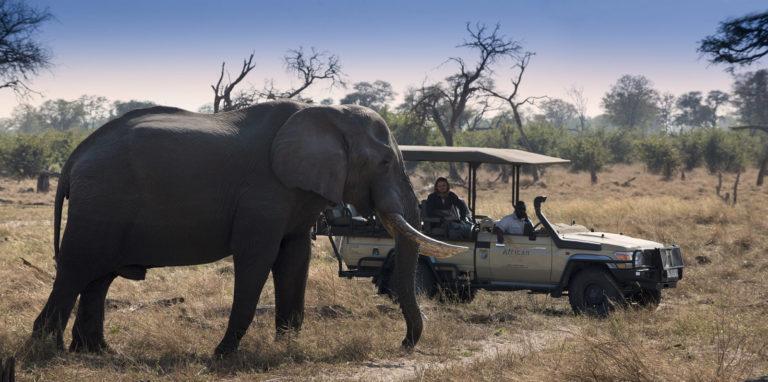 Khwai Leadwood game drive with elephant