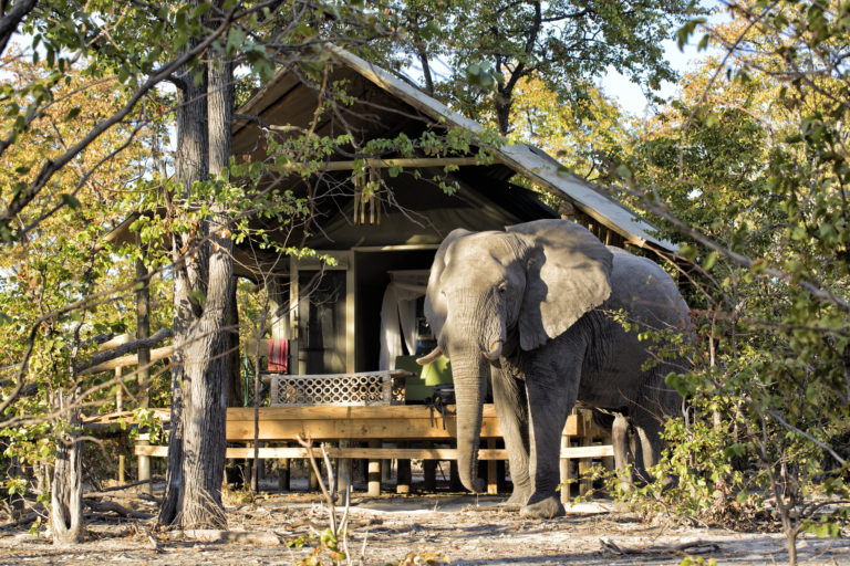 Guest tent at Hyena Pan with elephant in foreground it is common for the animals to wander around the camp