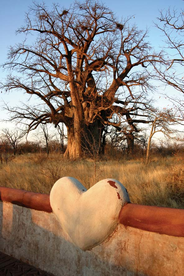 Planet Baobab - Baobab