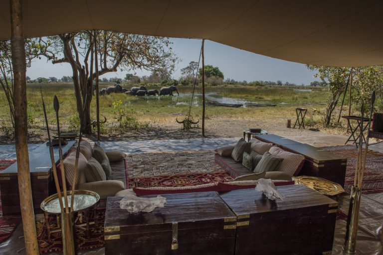Okavango Mobile Expeditions view of elephant herd from lounge area