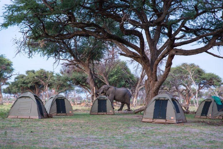 Wildlife accesses Bush Ways camp sites offering an authentic safari experience