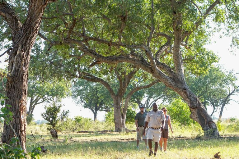 Guided nature walks are hosted on islands close to Camp Okavango