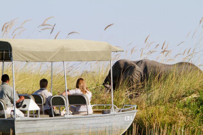 Sighting of majestic elephant on Camp Xakanaka's boating activity