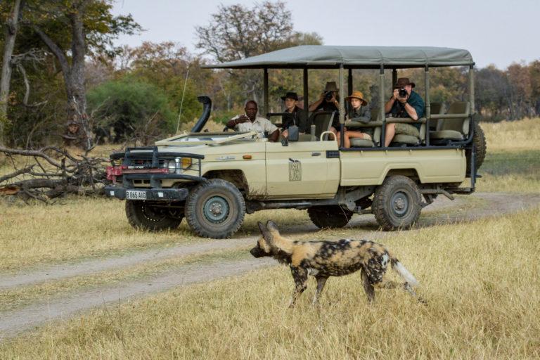 Camp Xakanaxa guests enjoy an exciting sighting of African Wild Dog