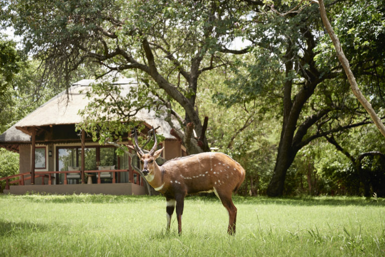 Guests delight in the close proximity of wildlife to Chobe Chilwero Lodge