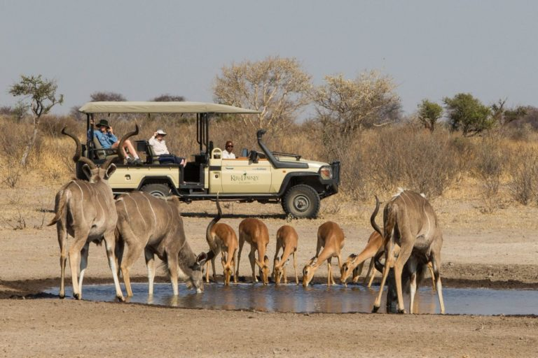 Plains game drink thirstily from a shallow water pan in the Kalahari