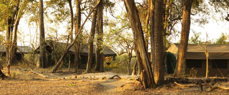 Safari Tents as seen in Footsteps Across the Delta camp