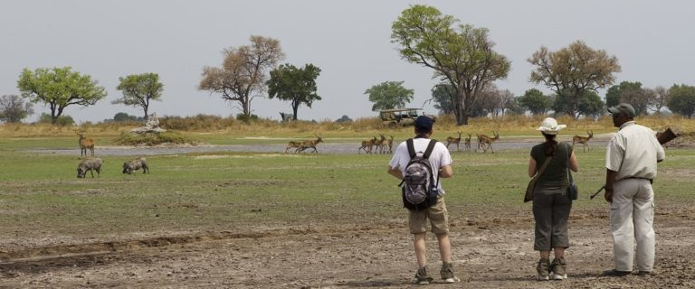 Herd of zebra running past walking safari guest from Footsteps Camp
