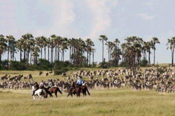 Camp Kalahari guests horse riding among the zebra