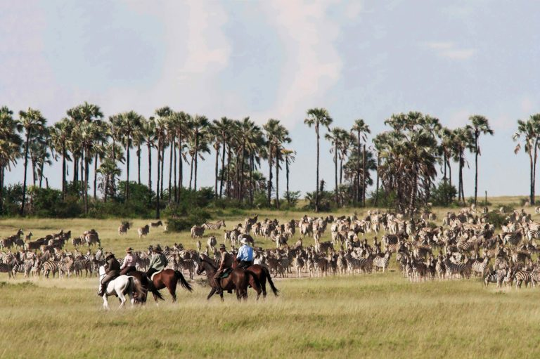 The zebra migration in the summer months makes the pans one of the best places to visit in Botswana