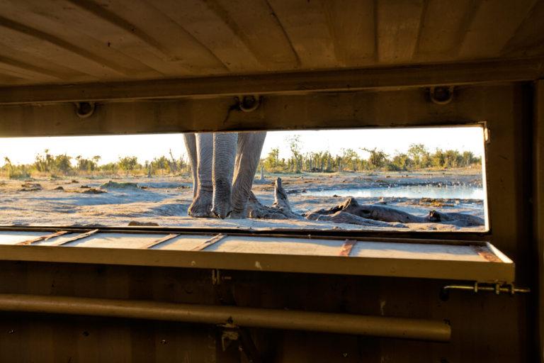 Hyena Pan's secret hide reveals ground level view of elephant