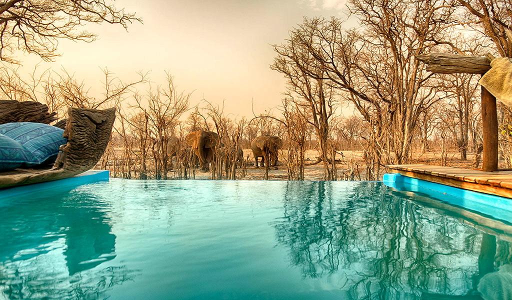 Swimming pool view of approaching elephant at Hyena Pan