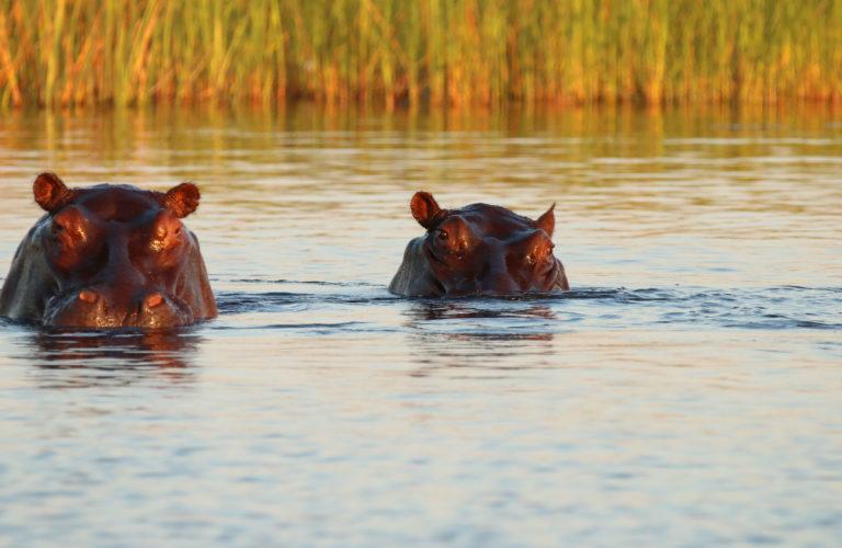 Hippos are found around Kadizora Camp