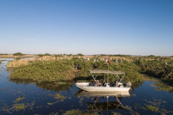 The heronry at Kanana camp is popular with birdwatchers to Botswana