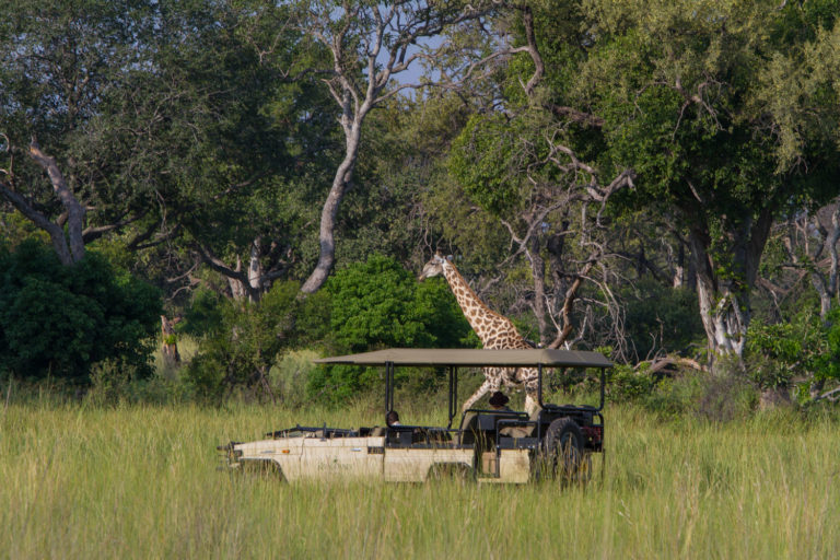 Game drive at Kanana a hiiden jewel of a camp located on the Xudum River