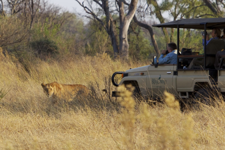 Kanana Camp guests view lion from the 4x4 safari vehice