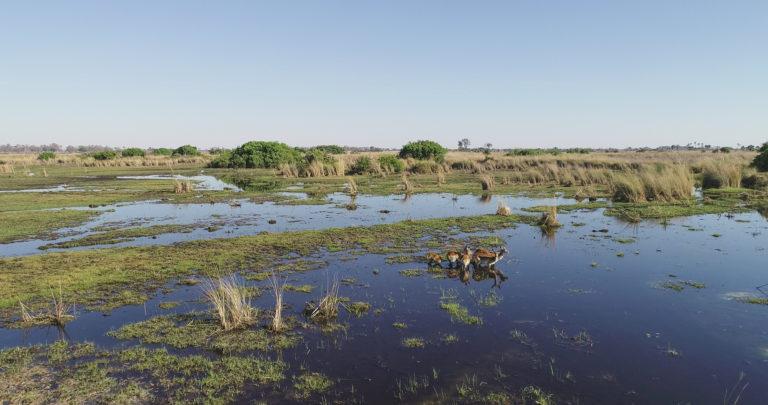 Wetland delta paradise surrounding the beautiful Kanana Camp