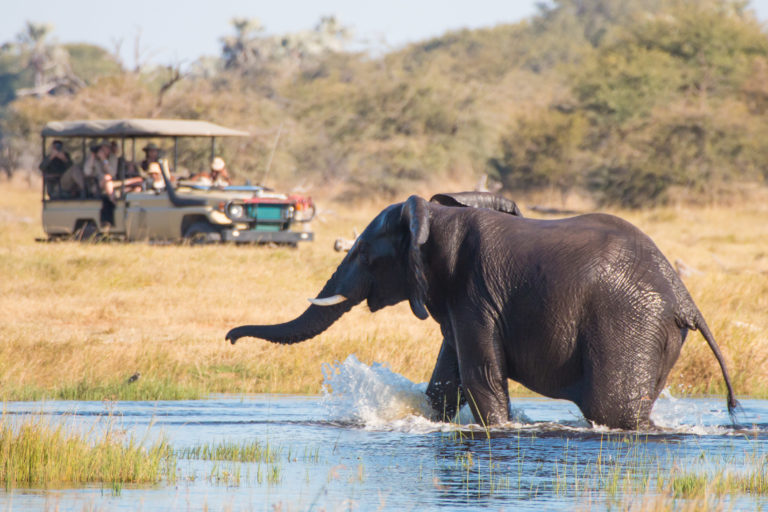 Wading elephants exits water on safari at Leroo La Tau