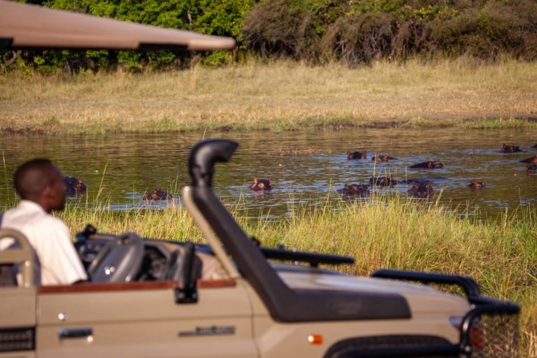 Machaba Camp game drive in Khwai area viewing hippos