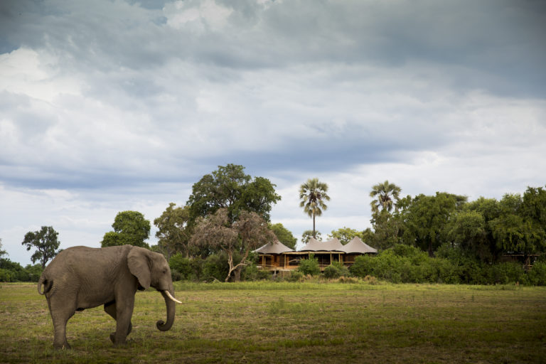 A mombo villa against a typical Delta landscape with palm trees and visiting elephant