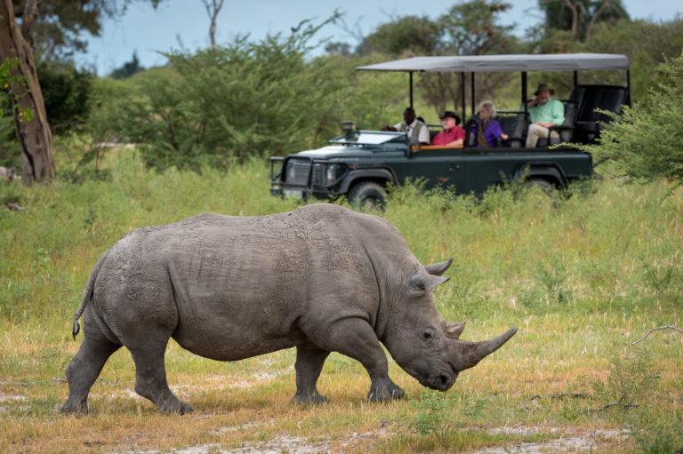 Mombo Camp game drive sighting of Africa's endangered white rhino