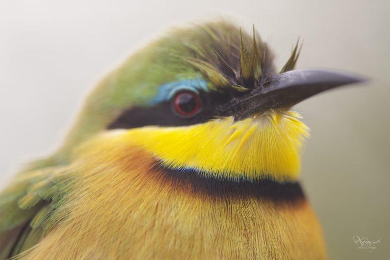 Bird species are prolific at Nxamaseri Island Lodge