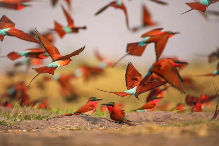 Nxamaseri Island Lodge is one of the foremost birding destinations in Botswana