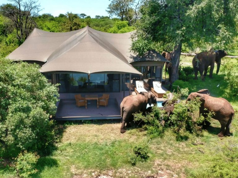 Elephants drinking from plunge pool of guest tent at Old Drift Lodge