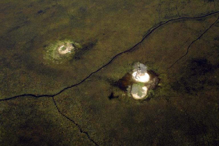 Island in the Pom Pom area of the Okavango