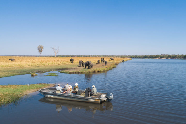 Elephant herd sighting from a boat excursions courtesy of Chobe Savanna