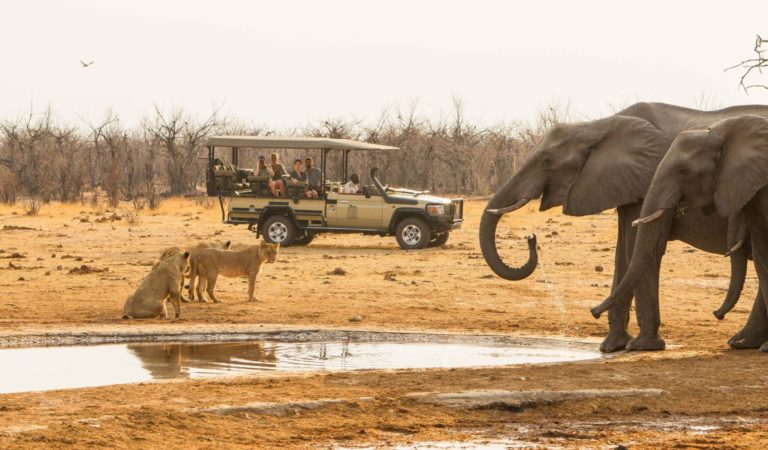 Savute guests view lion and elephant on game drive from Savute