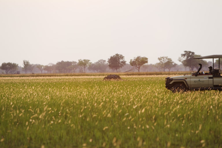 Shinde concession game drives allow for an exciting array of wildlife to be discovered
